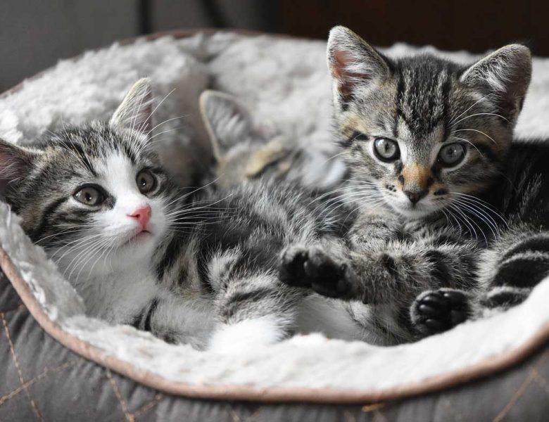 Tüm Kedi Malzemeleri Uygun Fiyatlarla